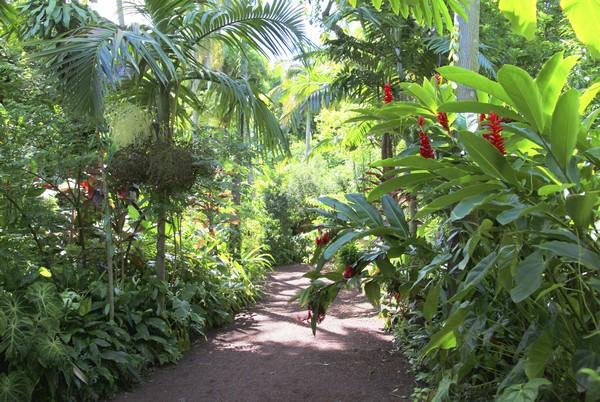 Les jardins botaniques de la r union location voiture - Le jardin des parfums et des epices saint philippe ...